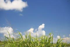 风景的草 库存图片