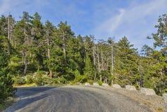 风景的路 免版税库存照片