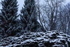 风景的雪森林 库存图片