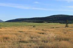 风景的Ranchlands 免版税库存照片