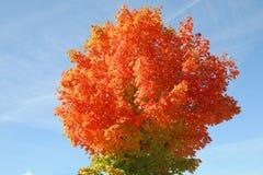 风景秋叶在威斯康辛 库存照片