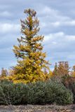 风景秋天堪察加半岛森林风景  免版税库存照片