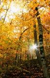 风景秋天的森林 免版税库存图片