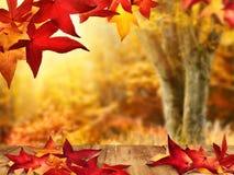 风景秋季看法 免版税库存照片