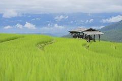 风景种植米 库存照片