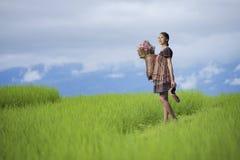 风景种植米 免版税库存图片