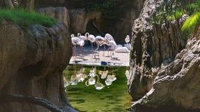 风景组成由与一个水池的岩石在背景中 库存图片