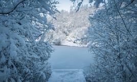 风景结冰的池塘在公园在英国 库存图片