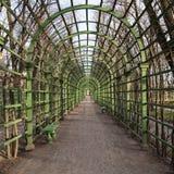风景绿色弧在夏天庭院圣彼得堡里 免版税库存照片