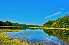 风景绿色草甸小河 库存照片
