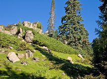 风景美丽的小山 库存图片