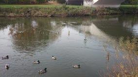 风景美丽的美丽如画的河在德国#2 免版税库存图片