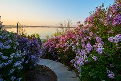 风景美好的花的日出 免版税库存图片