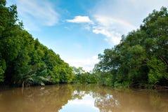 风景美洲红树观点的哥打贝卢,沙巴,马来西亚 免版税库存照片