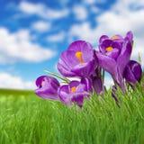 风景草天空和紫罗兰色fliower 免版税库存图片
