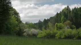 风景草甸和森林在春天 股票录像