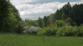 风景草甸和森林在春天 影视素材