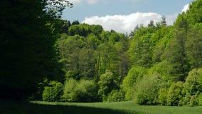 风景草甸森林天空云彩晚春 股票视频