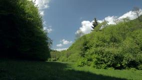 风景草甸森林天空云彩晚春 影视素材