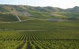 风景葡萄园在西西里岛 库存照片