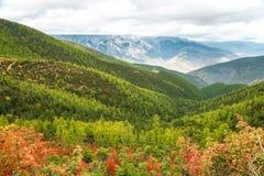 风景视图在乡下 库存照片