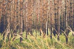 风景视图在国家公园 免版税库存照片