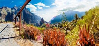 风景谷在西班牙 苹果覆盖花横向草甸本质星期日结构树 旅行冒险和o 免版税图库摄影