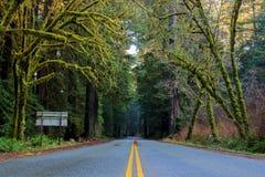 风景路通过大红木美国加州红杉sempervirens和m 免版税库存照片