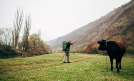 风景远足在山的旅游年轻人的视图图象 迁徙在他的旅途期间的旅客人,看对母牛 库存照片