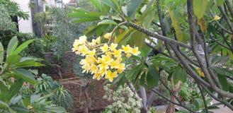 风景雅加达 图库摄影