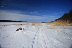 风景雪森林公路和蓝天 库存图片