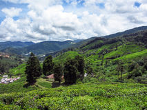 风景领域全景视图在山的 免版税库存图片