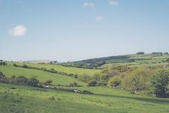 风景领域和小山在康沃尔郡英国 库存图片