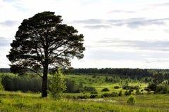 风景领域 库存照片