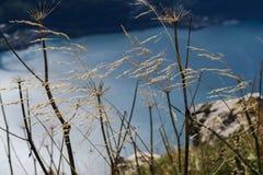 风景风景在瑞士:美丽的Walensee St Gal 库存图片