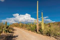 风景驱动在有柱仙人掌的Sonoran沙漠 免版税图库摄影