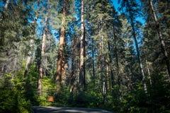 风景高速公路在美洲杉国家公园 免版税库存照片