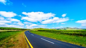 风景高速公路R538通过与杉树种植园的highveld在Hazyview和Whiteriver之间 免版税库存图片