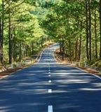 风景,大叻,杉木森林,旅行,越南,街道 图库摄影