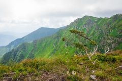 风景,旅行,旅游业 绿色山,树,草 水平的框架 免版税库存照片