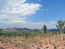 风景,自然。澳大利亚。 免版税图库摄影