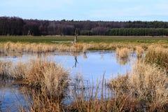 风景,冻池塘的冬天场面 免版税库存图片