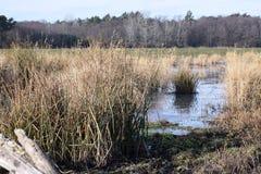 风景,冻池塘的冬天场面 图库摄影