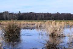 风景,冻池塘的冬天场面 免版税库存照片