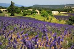风景, Valensole,普罗旺斯高原  免版税图库摄影