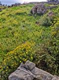 风景:有一个石小屋的草甸在背景中被采取在Fawwara,马耳他 免版税库存照片