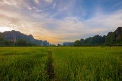 风景 与绿色米领域的山在日落期间在Phits 免版税库存照片