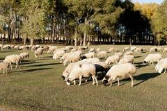 风景类别:丰宁:北京北部大草原风景特别是美国 免版税库存图片