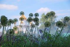 风景-在露水的草本 免版税库存照片