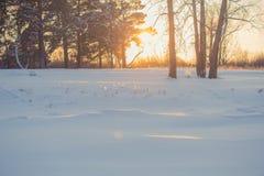 风景 天气,在前景的随风飘飞的雪 免版税库存照片
